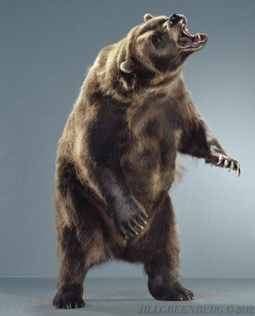 Ursine